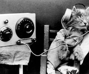 cat, music, and animal image