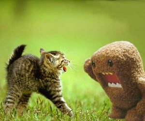 animal, lol, and cat image