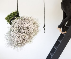 baby's breath, flower, and flowers image