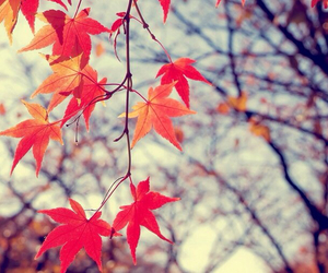 autumn, tree, and leaves image