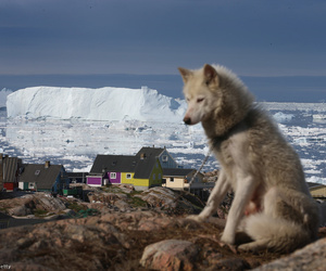 animal, dog, and arctic ocean image