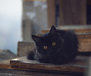 awn, black, and cat image