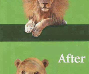 lion, funny, and hair image