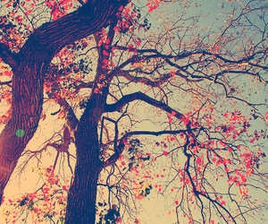 autumn, beauty, and trees image