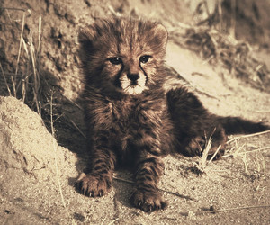 animal, lovely, and nature image