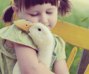 duck, cute, and goose image