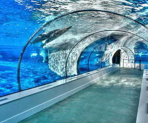 aquarium, water, and dolphin image