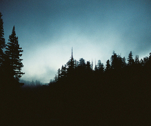 forest, photography, and sky image