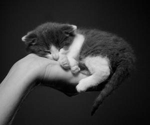 animal, kitten, and cute image