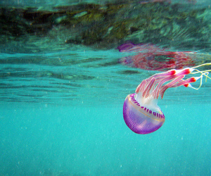 jellyfish, ocean, and sea image