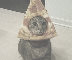 cat, pizza, and funny image