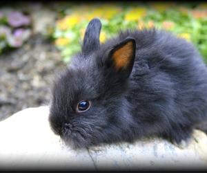 adorable, bunny, and rabbit image
