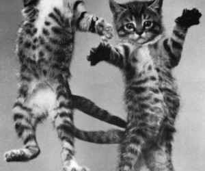 black and white, cats, and jump image