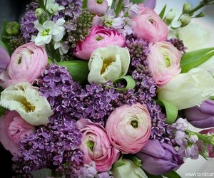 flowers, peonies, and spring image