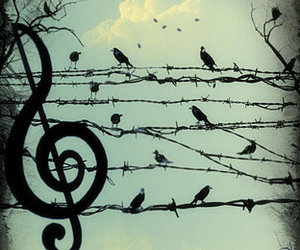 bird, music, and sky image