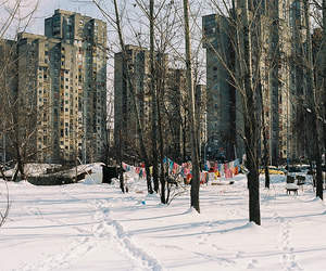 35mm, russia, and trees image