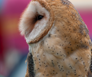 animals, nature, and owl image