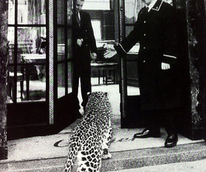 leopard, animal, and hotel image