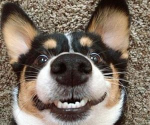 dog, funny, and smile image