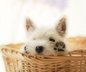 dog, puppy, and basket image