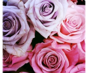 pink and purple flowers image