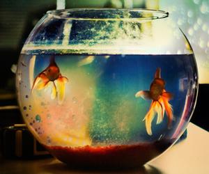 fish, water, and goldfish image
