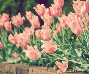 flowers, nice, and cute image