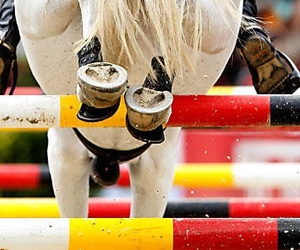 cool, horse, and horseriding image