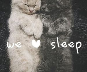 sleep and cat image