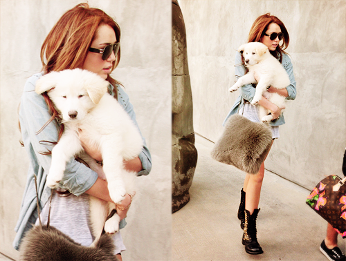 miley cyrus, dog, and puppy image