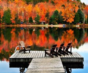 autumn, fall, and see image