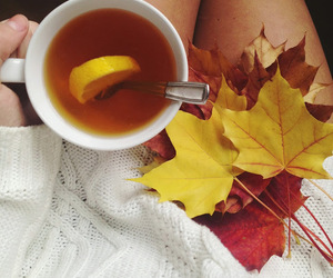 autumn, leaves, and tea image