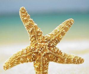 beach, beautiful, and starfish image
