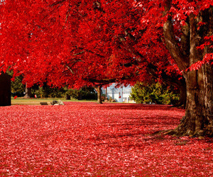 red, tree, and nature image