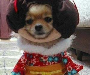 dog, cute, and funny dogs image