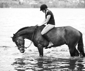 autumn, equestrian, and horse image