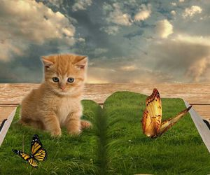 cat, butterfly, and kitty image