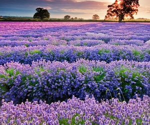 aww, field, and landscape image