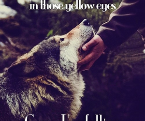 wolf, eyes, and Sia image