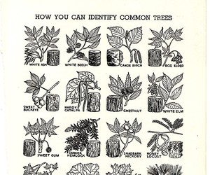 common, nature, and guide image