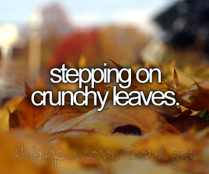 leaves, fall, and autumn image