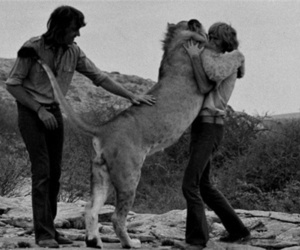 lion, Christian the Lion, and hug image
