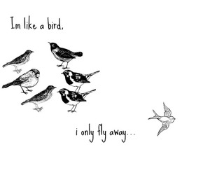 birds, boys, and lovetext image