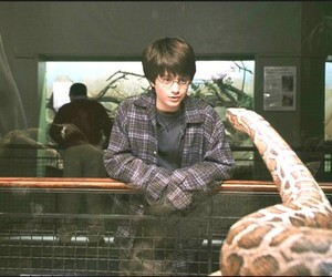 harry potter, snake, and parseltongue image