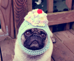 pug, cupcake, and cute image