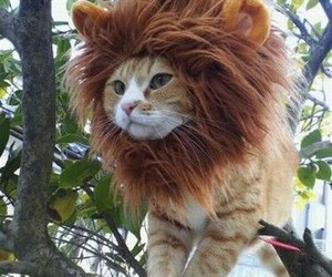 cat, lion, and separate with comma image