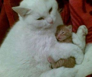 animals, cats, and mom image