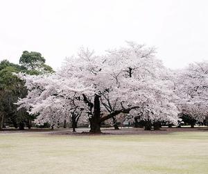 beautiful and japan image
