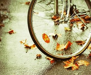 autumn, bicycle, and leaves image