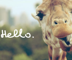 hello, giraffe, and animal image